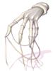 悪霊の糸の手袋 [1]